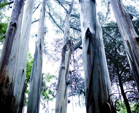 Dandenong Ranges National Park Logo and Images