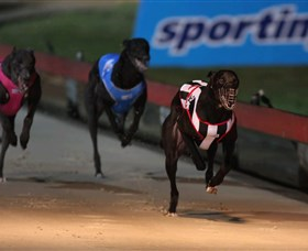Dapto Dogs Logo and Images