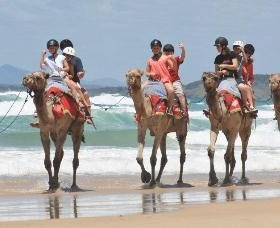 Camel Rides with Coffs Coast Camels Logo and Images