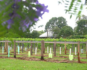 Douglas Vale Historic Homestead & Vineyard Logo and Images