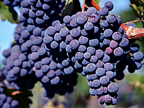 Morningside Vineyard Image