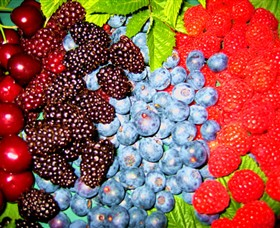 Blue Hills Berries & Cherries Logo and Images