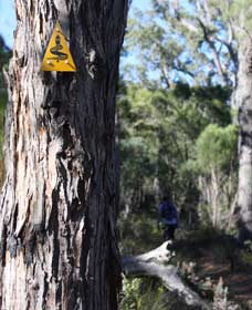 Mount Dale Walk Trail