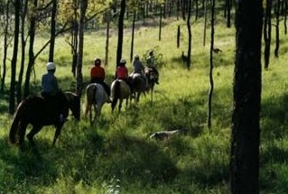Hunter Valley Horse Riding and Adventures Image