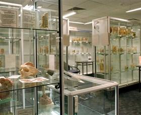 Museum of Human Disease Image