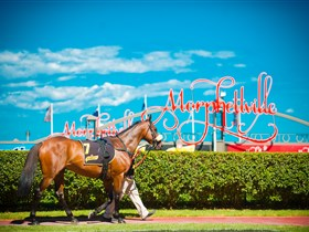 Morphettville Racecourse Logo and Images