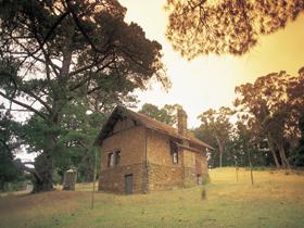 Heysen - The Cedars Image