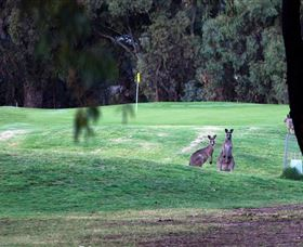 Deniliquin Golf Club Logo and Images