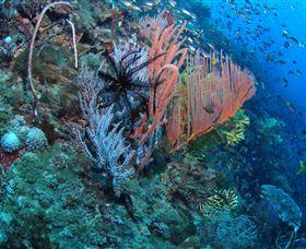 SS Yongala Dive Site Image