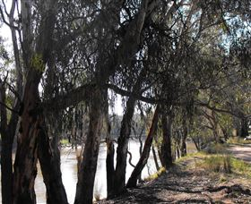 Mia Forest Drives Narrandera Logo and Images