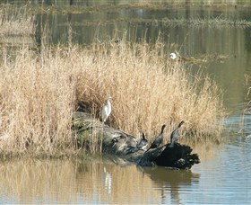 Narrandera Wetlands Logo and Images