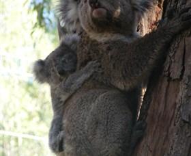 Koala Spotting Regeneration Reserve Logo and Images