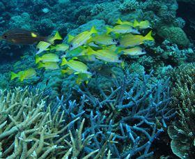 Castle Rock Dive Site Image