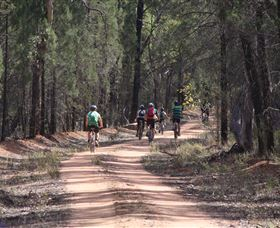 Pilliga Forest Logo and Images