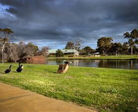 Roy Little Park Merredin