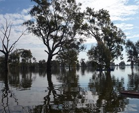 Doodle Cooma Swamp Logo and Images