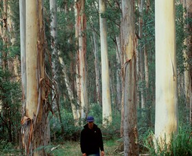 Blue Gum Forest Logo and Images