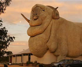 Big Merino Logo and Images