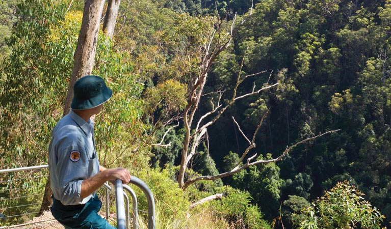 Lyrebird Falls walking track Logo and Images