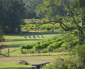 Wollombi Wines Logo and Images