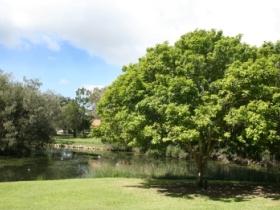 Hervey Bay Botanic Gardens Image