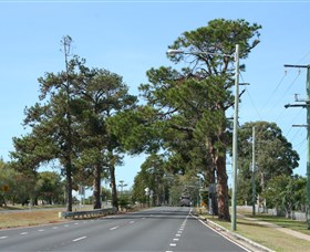 Anzac Memorial Avenue, Redcliffe Logo and Images