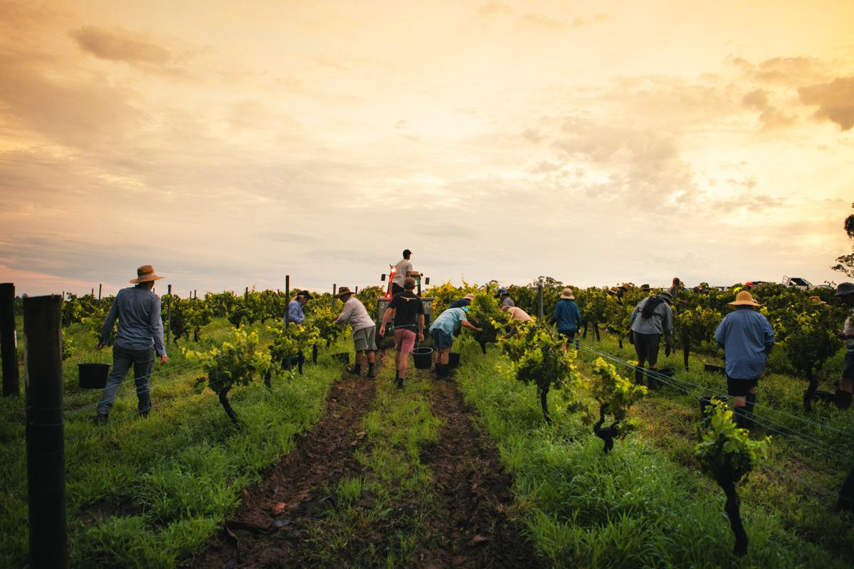 Tyrrells Vineyards Image