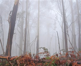 Mogo Bushwalk Logo and Images