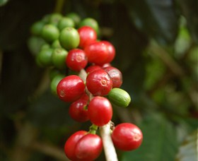 Wombah Coffee Plantation Logo and Images