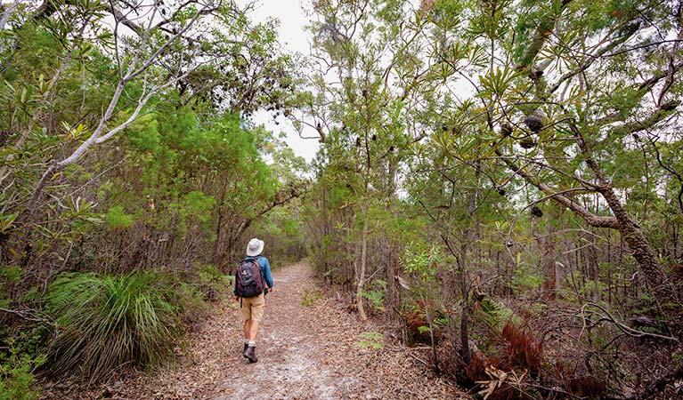 Angophora grove walking track