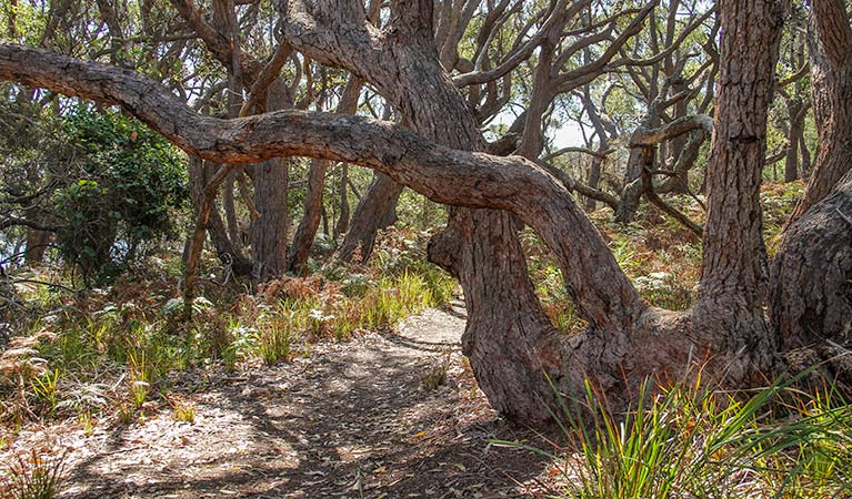 Middle Lagoon walking track Logo and Images