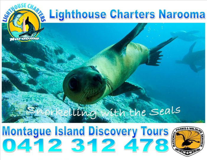 Lighthouse Charters Narooma Logo and Images