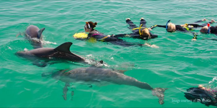Rockingham Wild Encounters - Swim with Wild Dolphins Logo and Images