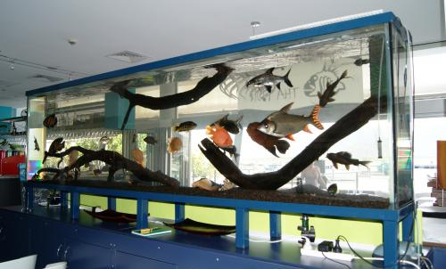 Aquariums in Cairns Logo and Images
