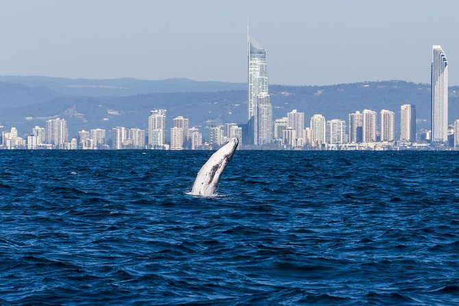 Half-Day Whale Watching and Canal Cruise from Surfers Paradise Logo and Images