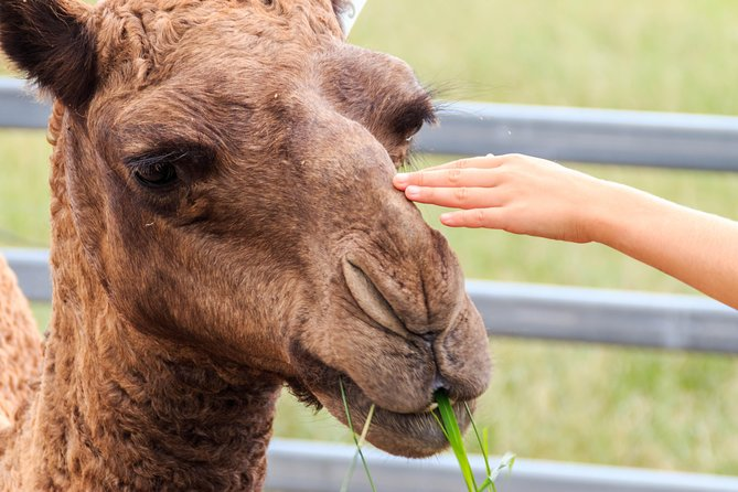 Camel Farm Deluxe Experience Logo and Images