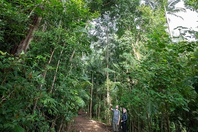 Tropical Rainforest & Waterfalls | Guided Walk | from Airlie Beach, Whitsundays Logo and Images