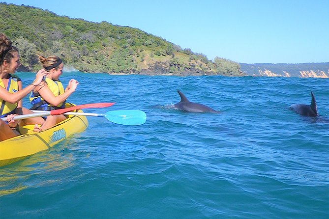 Half-Day Kayak with Dolphins and 4WD Beach Drive from Rainbow Beach Logo and Images