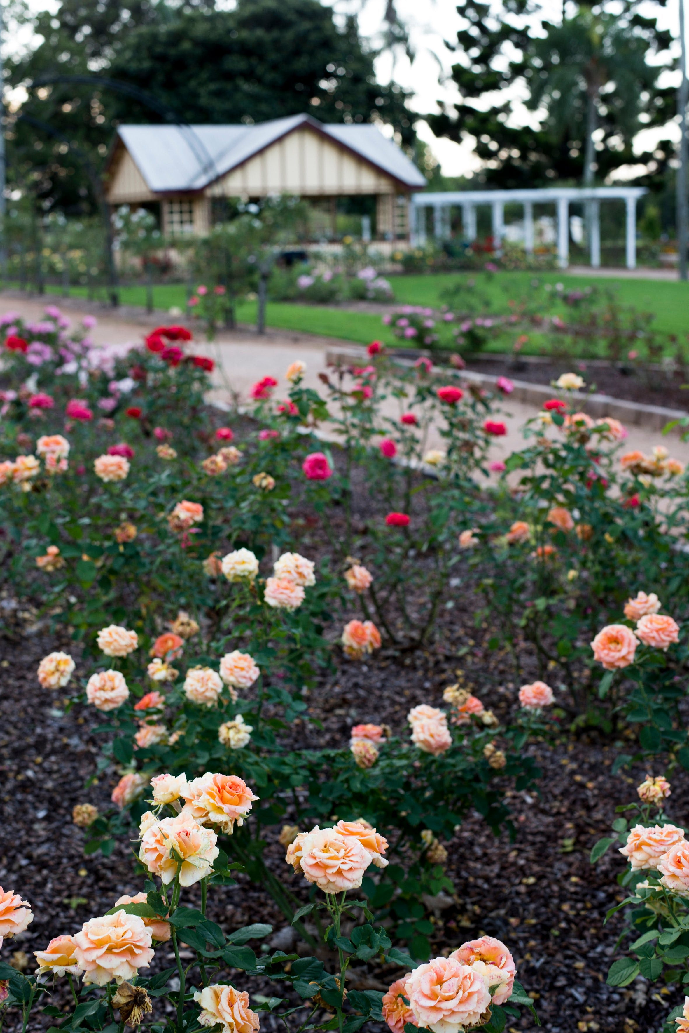 Newtown Park State Rose Garden Logo and Images