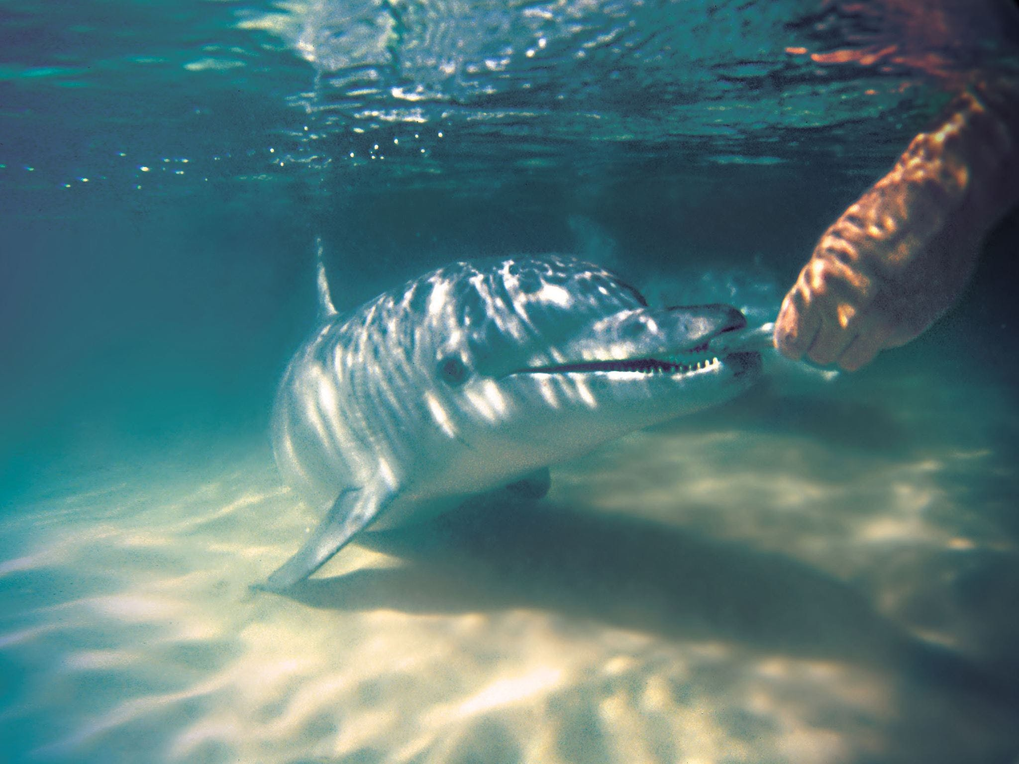 Tangalooma Wild Dolphin Feeding Logo and Images