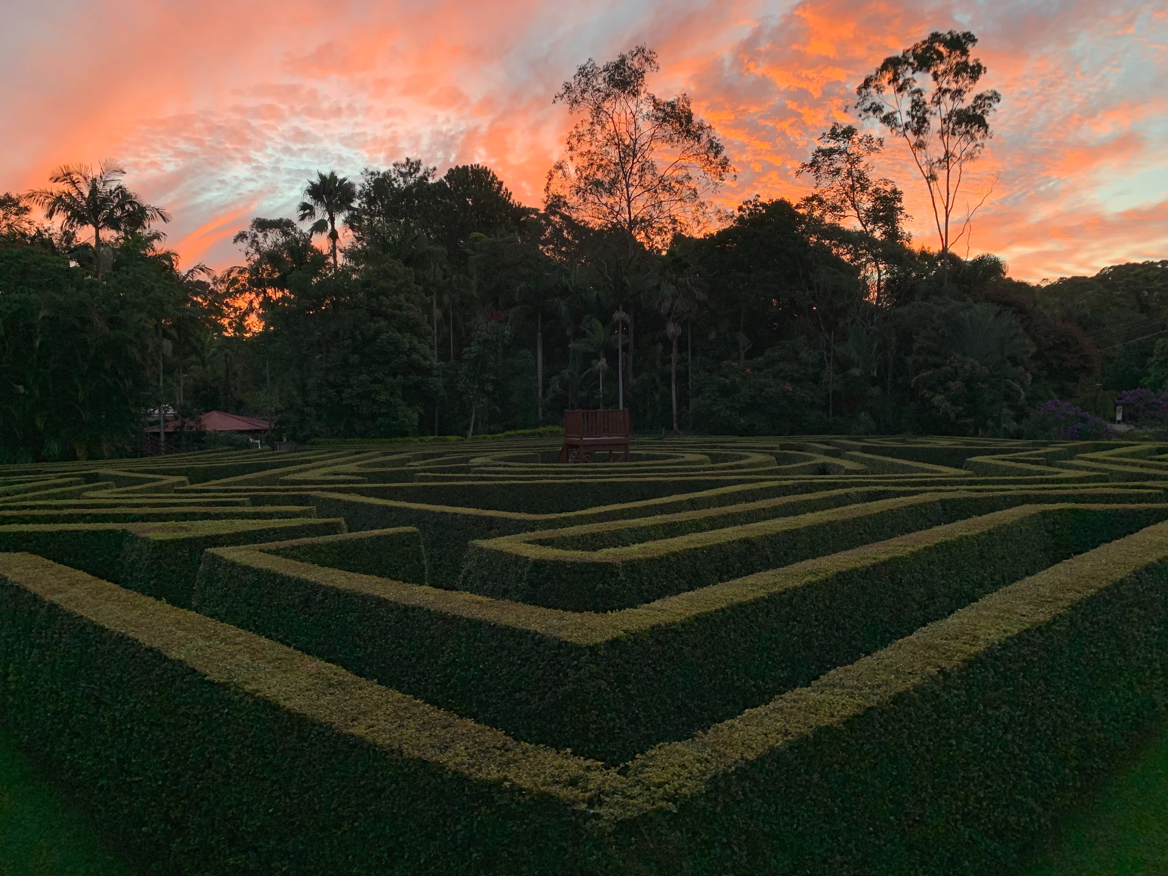 Bellingham Maze Logo and Images