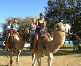 Calamunnda Camel Farm Logo and Images
