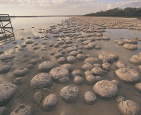 Lake Clifton Thrombolites Logo and Images