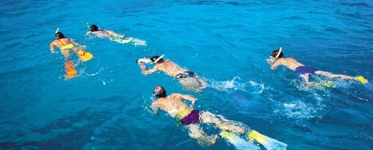 Aristocat Snorkel and Scuba Port Douglas Logo and Images