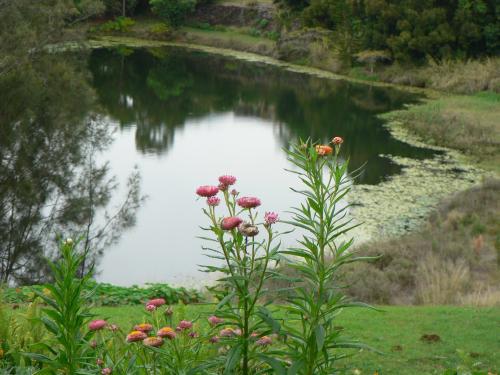 Banora Holistic Healing