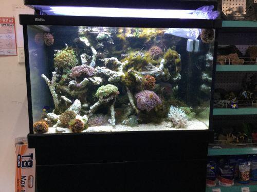 A1 Aquarium World