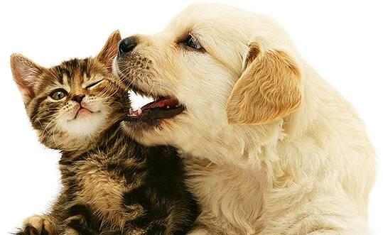 One Stop Pet Supplies