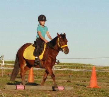 Concise Equestrian Centre