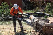 Full Tree Service & Stump Removal