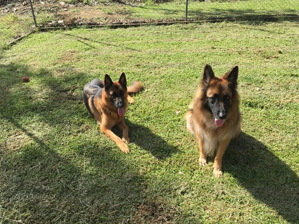 Bayview Canine Lodge